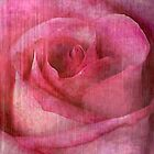 Faded Rose by Kelly Rockett-Safford