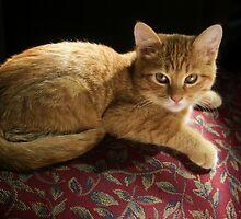 Kitty by Kelly Rockett-Safford