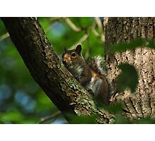 Fox Squirrel Photographic Print