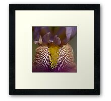Naked Lady flower detail blooming color squared Framed Print