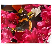 Cherry Blossom pow wow Poster