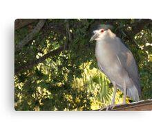 Rooftop heron Canvas Print