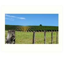 rural grapevines Art Print