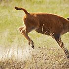Bison Calf 1 by Miles Glynn