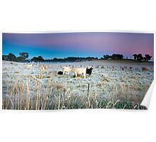 Cold Frosty Morning Near Carcoar in NSW Poster