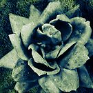 Gravel Rose by Jaysen Edgin