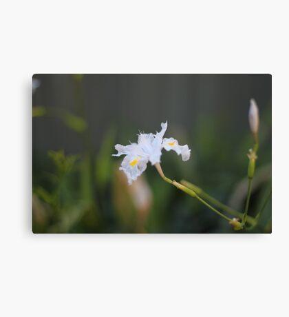 delicate white flower macro Canvas Print
