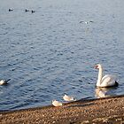 lake paradise by magicamente