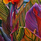 Canna 2. by Bette Devine