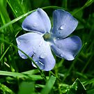 little blue one by ciriva