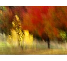 My Autumn View Photographic Print