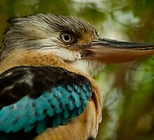 Blue Winged Kookaburra by Danielle  Miner