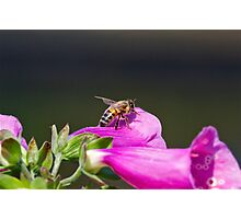 Bee_utiful Photographic Print
