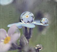 Forget-Me-Not Dew Drop by Shelly Harris