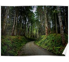 Road In The Woods Poster