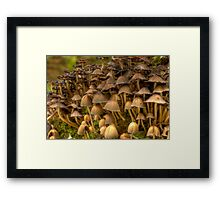 HDR-Mushrooms Framed Print