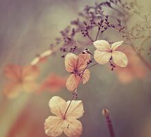 Butterfly Petals by SkinnyBoy