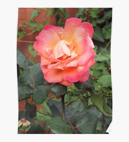 pink flower let the coulor strive  Poster