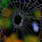 Light Reduced Spider Web by relayer51