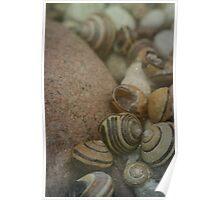 Snails' Rock Poster
