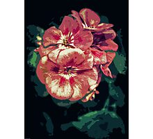 Floral Bloom Photographic Print