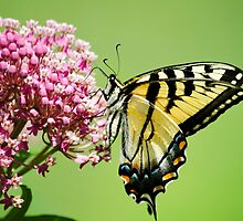 Butterfly Nectar by Christina Rollo