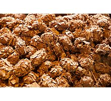 Chocolate truffles Photographic Print