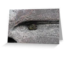 A Frog For An Eye! Greeting Card