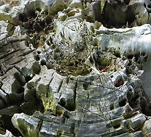 An Old Weathered Tree Stump by MaryinMaine