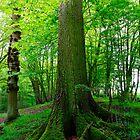 Vaulting Oak by Stephen J  Dowdell