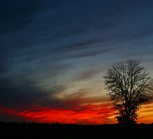 Primary Colors by Kelly Rockett-Safford