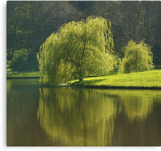 Peaceful reflections by shortarcasart