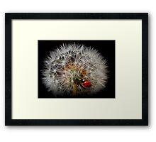fairy ladybird Framed Print