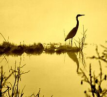 On Golden Pond by Caleb Ward