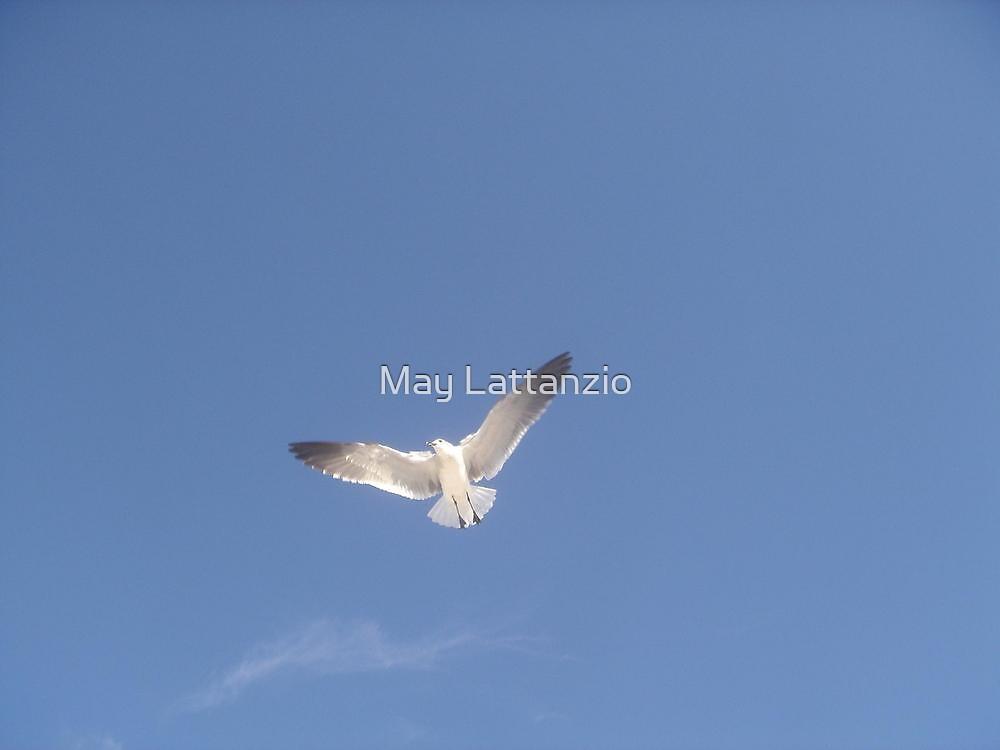 The Lone Tern by May Lattanzio