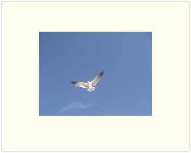 The Lone Tern by May Lattanzio