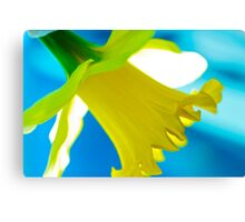 Daffodil Blues Canvas Print