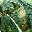 Old tree-trunk by ciriva