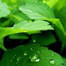 Morning dew 4 by ciriva