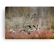 Canada Geese Landscape Art Canvas Print