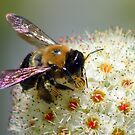 Spring Bee by Richard Skoropat