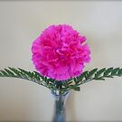 Pink Carnation By Jonathan Green by Jonathan  Green