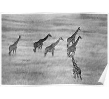 Which Way- Masai Mara Kenya Poster