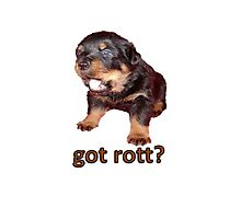 Got Rott? Rottweiler Owner  Photographic Print