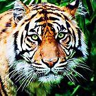 Panthera Tigris  by Ian Jeffrey
