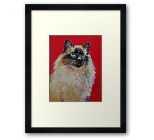 Siamese Cat Portrait Framed Print