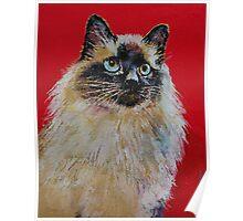 Siamese Cat Portrait Poster