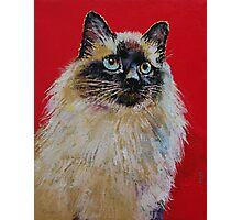 Siamese Cat Portrait Photographic Print