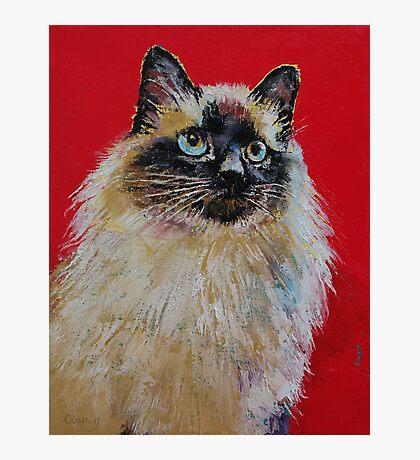 Siamese Cat Portrait Photographic Print