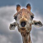 Giraffe  by venny